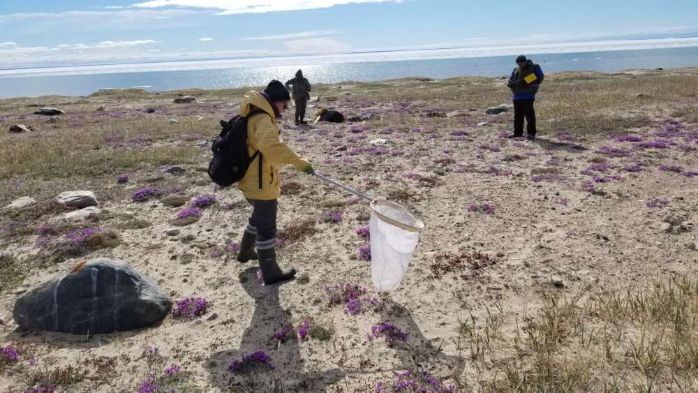 Field work in the Canadian Arctic